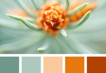 Бирюзовый, бежевый, оранжевый