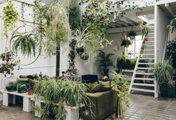 Тем, кто любит живые растения в доме, следует позаботиться об усиленном освещении