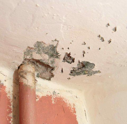 Потолок поражен плесенью вблизи стояка