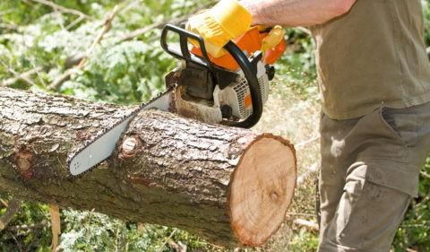 Срез дерева для будущего светильника